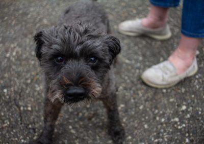 ParkElevators_Details&Dogs-10